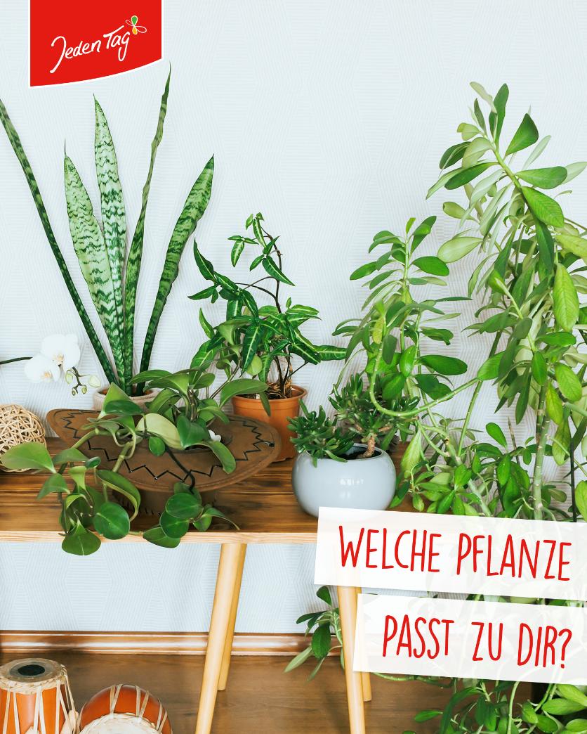 Jeden Tag Life-Hack: Zimmerpflanzen