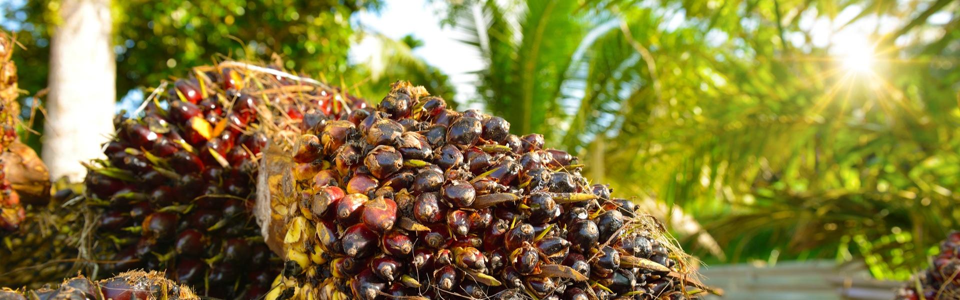 Palmöl Header