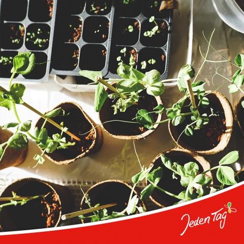 Gemüsebeet anpflanzen Jeden Tag